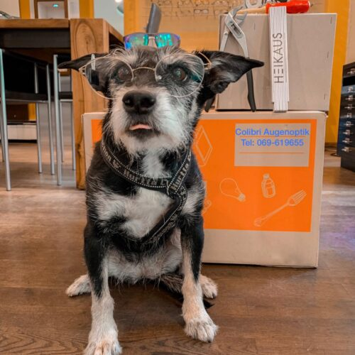 Hund mit Brille - Colibri Augenoptik: 30 Jahre Optiker in Frankfurt am Main